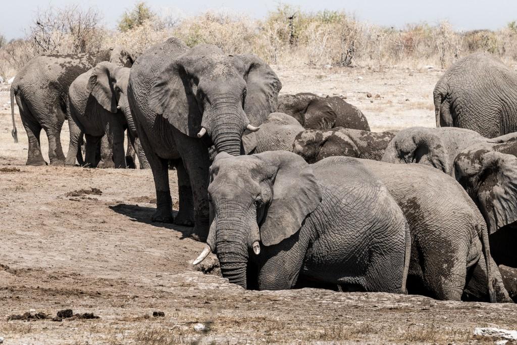 elefanti namibia