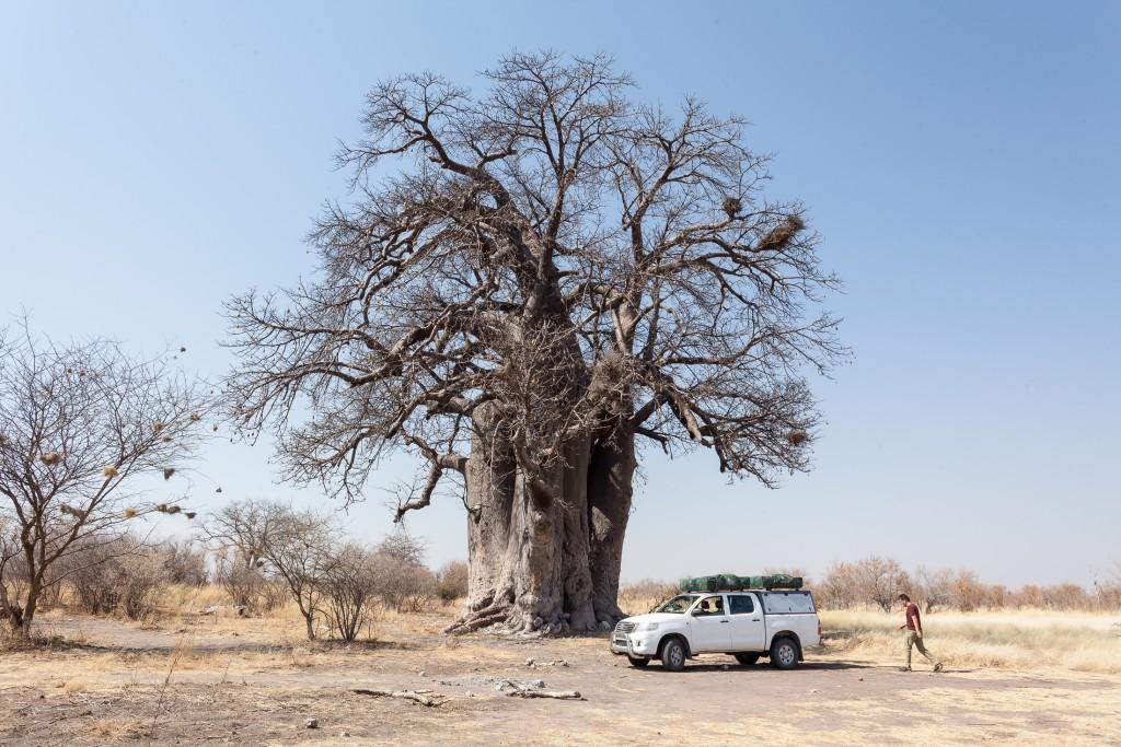 namibia baobab