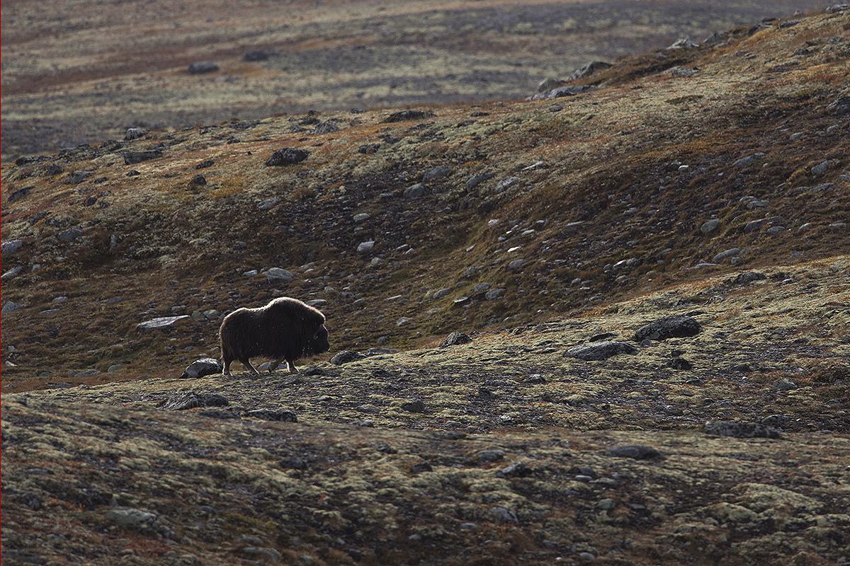 Review Merinito conditii extreme Norvegia