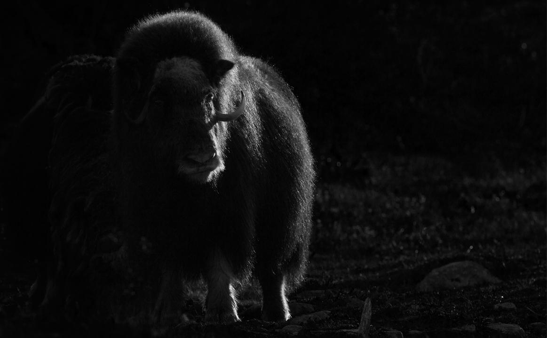 Tura fotografie Norvegia cu Merinito