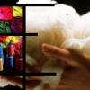 7 motive să alegi echipamentul din lână – totul despre merinos